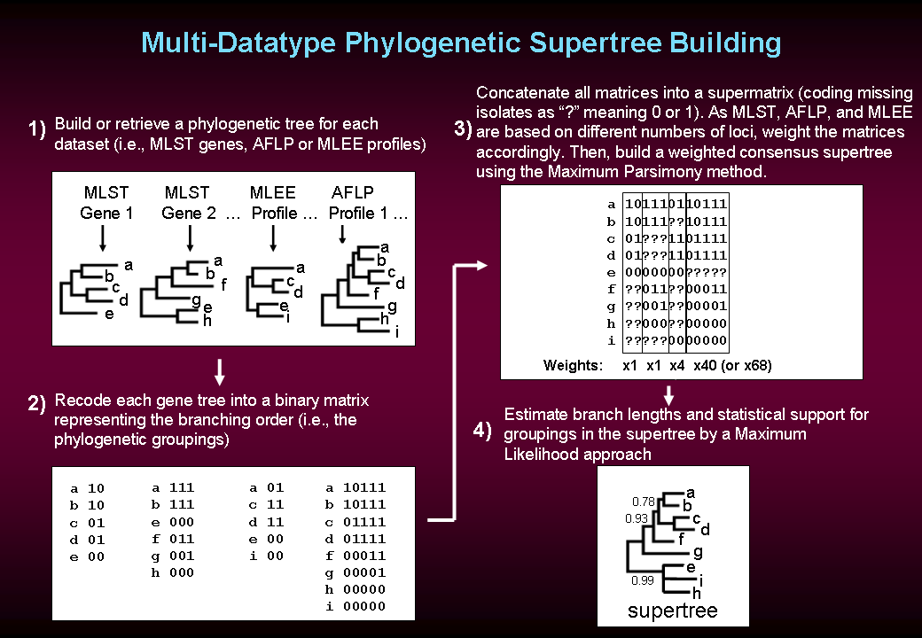 Multi-Datatype Supertree reconstruction summary picture